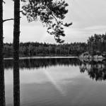 schweden 3 glaskogen 2010 gerahmt 52x42cm 1/15