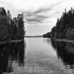 schweden 4 glaskogen 2010 gerahmt 52x42cm 1/15